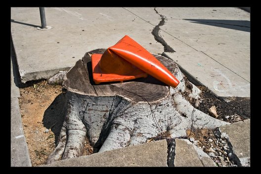 tree stump with cone, San Pedro